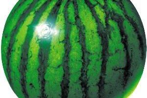 Watermelon-prober