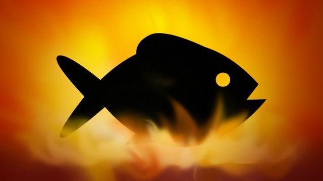 super-fish-test